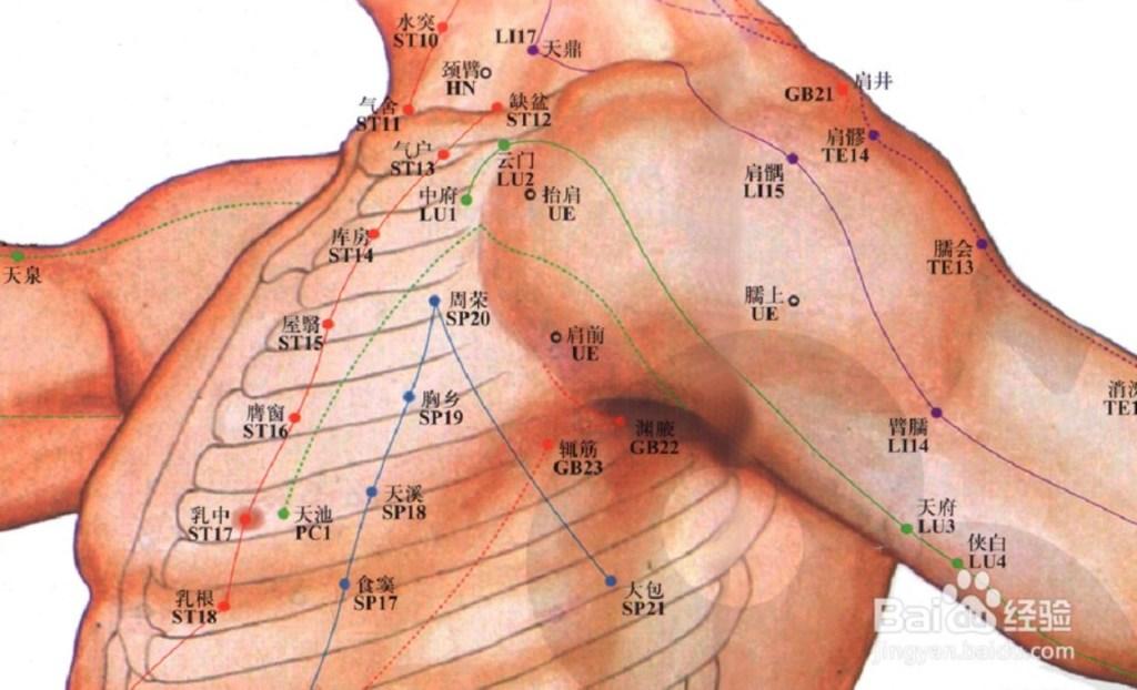Illustration des méridiens et points d'acupuncture de la poitrine et de l'épaule