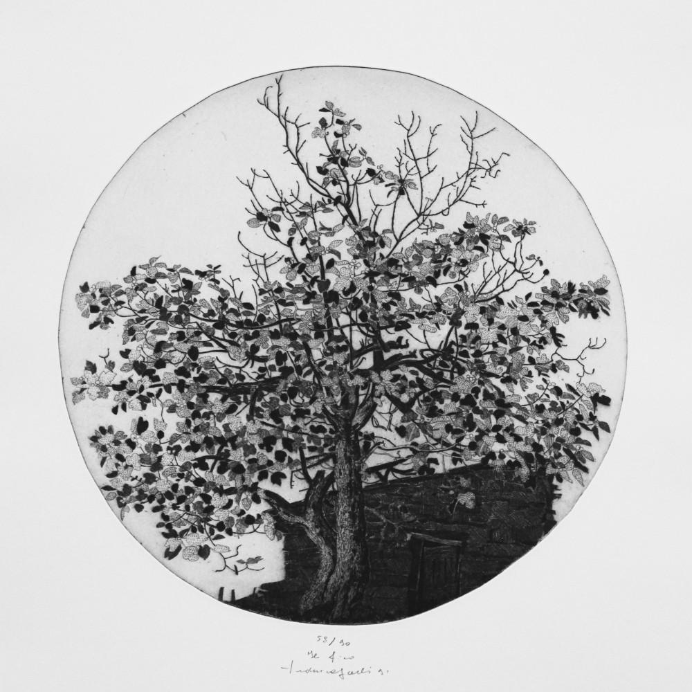 Figuier, gravure de Federica Galli
