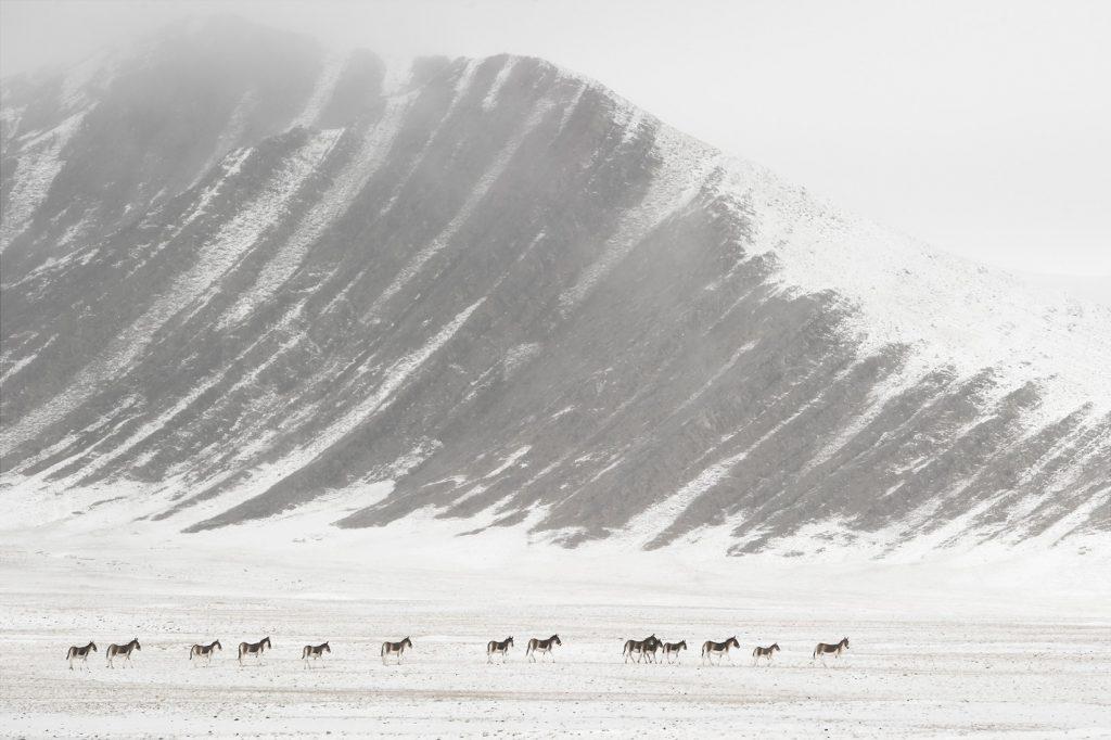 Tibet, promesse de l'invisible, Vincent Munier.