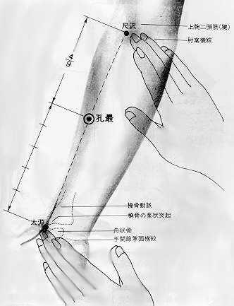 孔最 kǒng zuì, est le sixième point du méridien du poumon