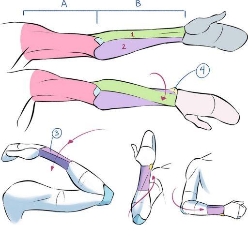 Mouvements des bras, illustration de Eridey