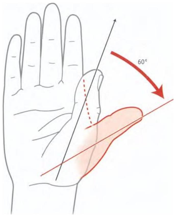 Illustration de l'extension du pouce