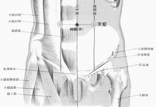 天枢 tiān shū est le vingt cinquième point du méridien de l'estomac