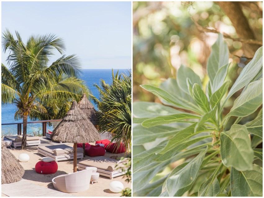 Jardin de l'hotel palm