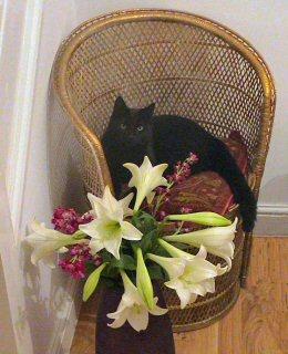 Blackjack with Flowers