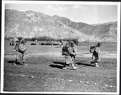 Tibetan porters and muleteers