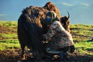 Tibetan nomad petition