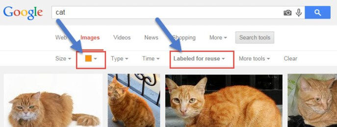 Google Cats Search