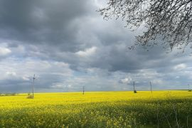 Rapeseed close to Arad city