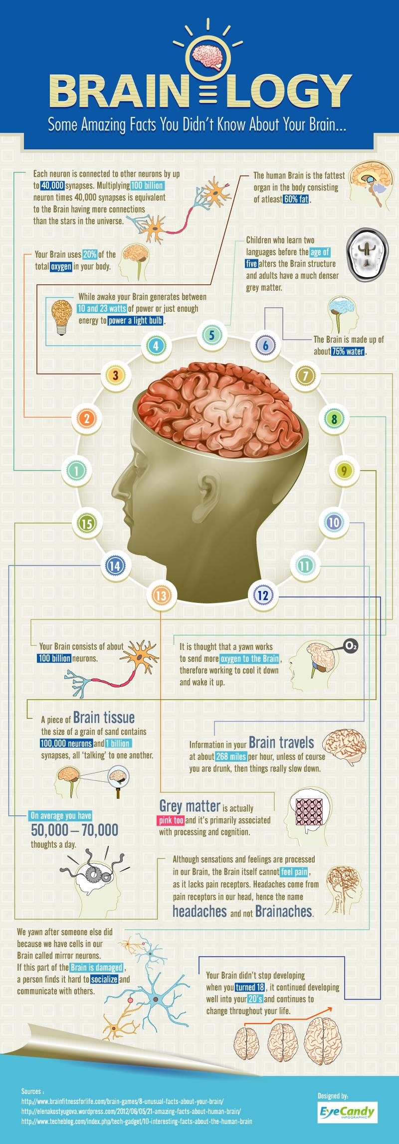 Algunos datos sobre el cerebro