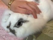 คาเฟกระต่าย
