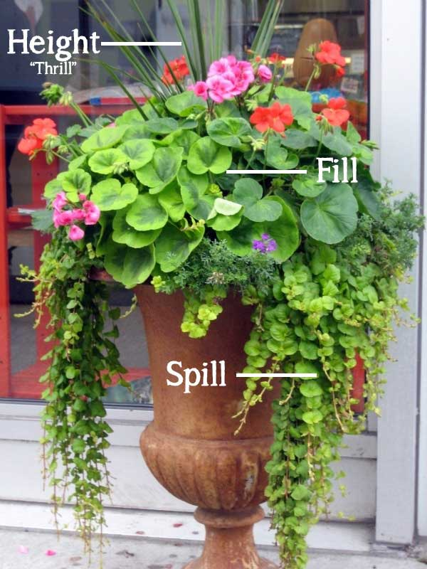 The Simple Formula For A Beautiful Container Garden TIDBITS&TWINE
