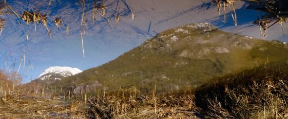 Reflection IV