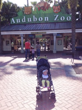 First trip to the zoo!