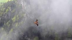 Ein Rotmilan aus der Vogelperspektive