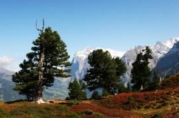 Grindelwald, 2009