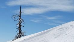 Ob dieser einsame Baum den Winter überleben wird?