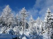 Winterwunderland am Gemmipass