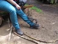 Eichhörnchen-Dressur