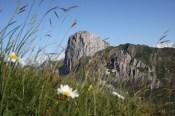 Stockhorn im Bergfrühling