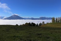 Niesen über dem Nebelmeer