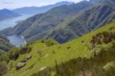 Nera Verzasca-Ziegen in den steilen Hängen oberhalb Odro