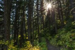 Die Sonne scheint durch den Wald
