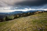 Gewitterstimmung über der Alp Rämisgummen