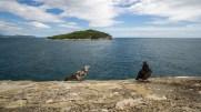 Tauben vor der Insel Lokrum