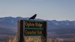 Ogilvie Ridge Look out