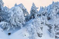 Was für ein Winterwunderland!
