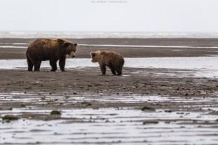 Die Bärenmutter weist den Jungspunt zurecht