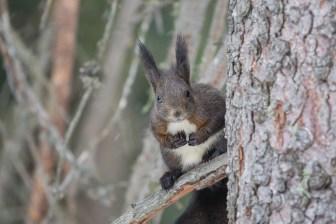 Auch von diesem Baum schauen neugierige Augen auf mich runter