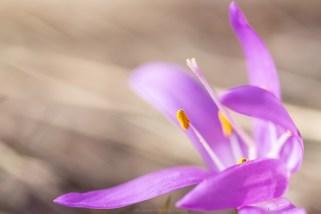 Lichtblumen im Wallis