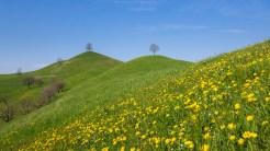 Frühlingswiese im Zürcher Oberland