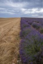 Kron & Lavendel