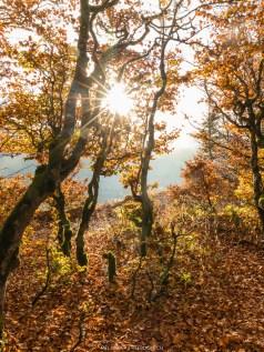Herbstlicht II