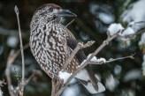 Beispiel Vogelfotografie