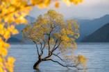 Wanka Tree Autumn Frame