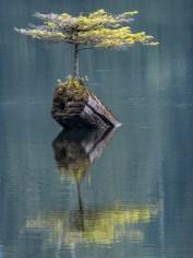 Tree Magic, Vancouver Island, Kanada