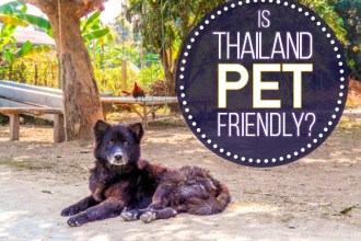 Is Thailand Pet Friendly?