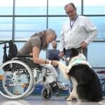ESPAÑA | Ingresan perros a Hospitales para ayudar y alegrar a personas internadas