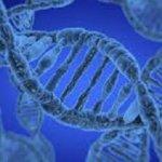 EL ADN DE LAS PLANTAS Y ANIMALES Y LA COLONIZACIÓN DE AMÉRICA