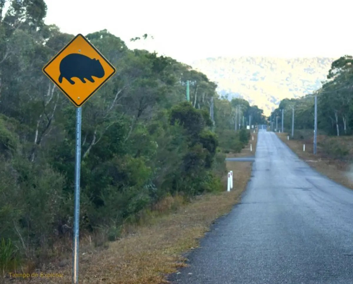 Wombat Road Sign, Kangaroo Valley, NSW, Viajar a Australia