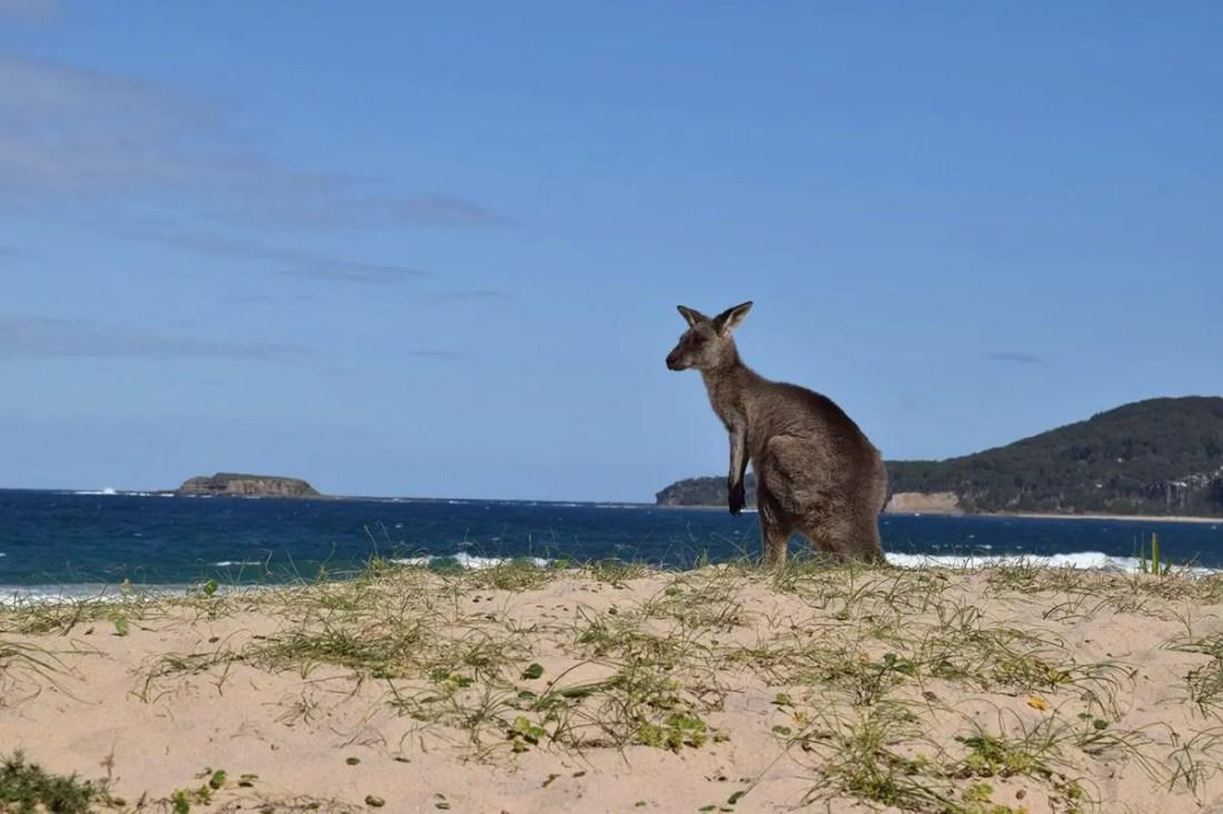 Pebby Beach, Eurobodalla, Costa Sur de NSW, Australia @Tiempodexplorar