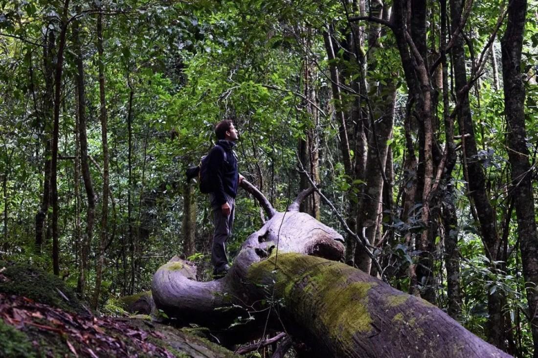 Mount Wilson Blue Mountains Naional Park NSW Australia 2