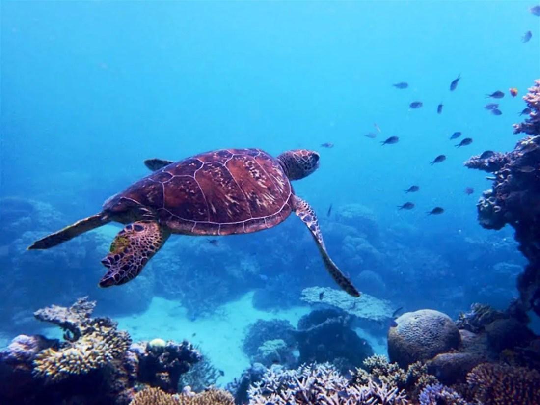 Barrera de coral Queensland Australia