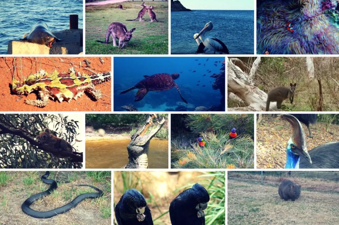 collage animales australianos. Cómo es Austalia