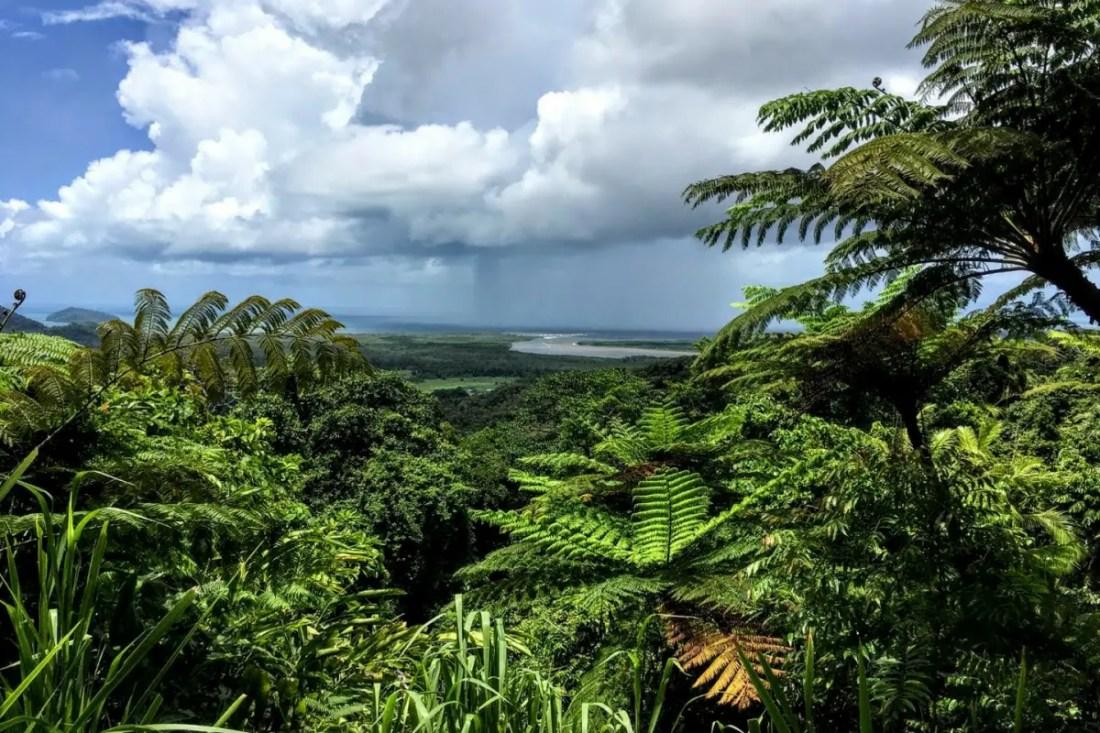 Daintree Rainforest. Australia National Parks
