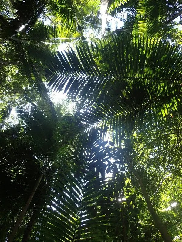 bosque tropical Fraser Island Australia